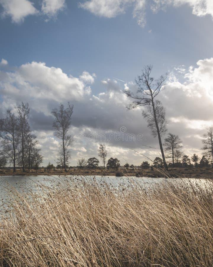 Ветреное озеро с тростниками в переднем плане стоковые изображения rf