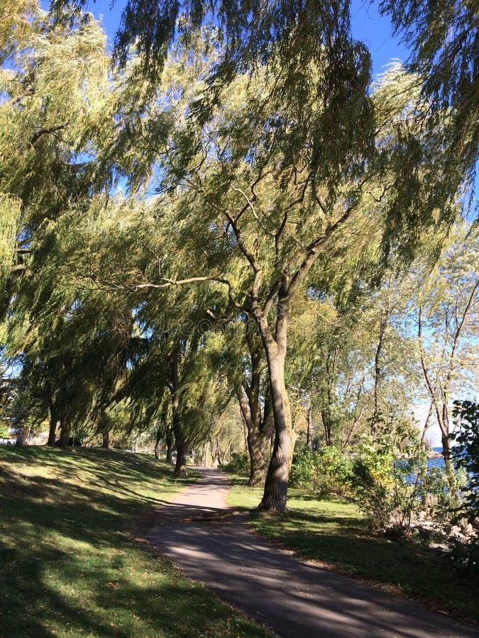 Ветреный день на парке Len Форда в Торонто, Онтарио, Канада Лето 2017 стоковые фото
