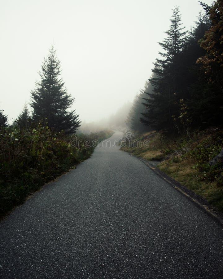 Ветреный туман следа стоковые изображения rf