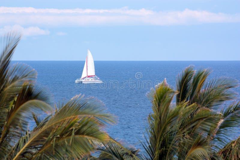 ветрила Гавайских островов стоковое фото
