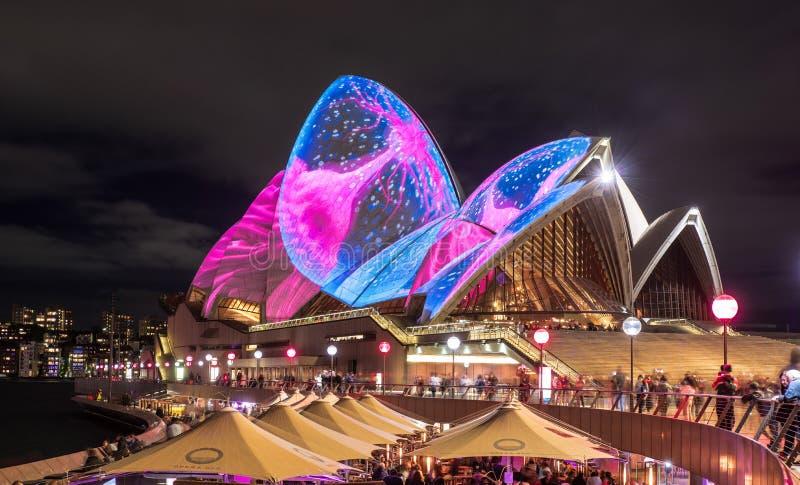 Ветрила оперного театра Сиднея загорелись освещают вверх во время яркого события публики 2017 ежегодников стоковая фотография