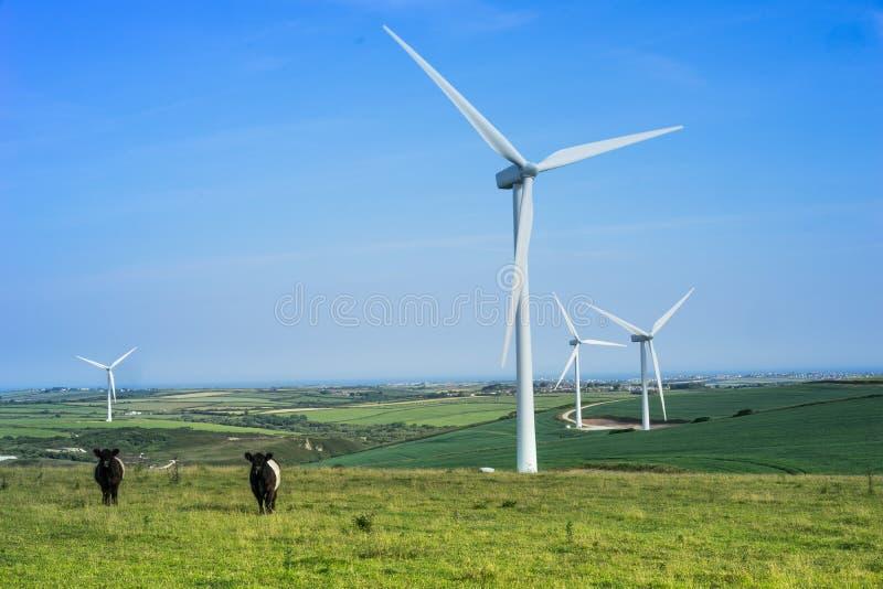 Ветровая электростанция с пасти скотин и турбин стоковая фотография rf