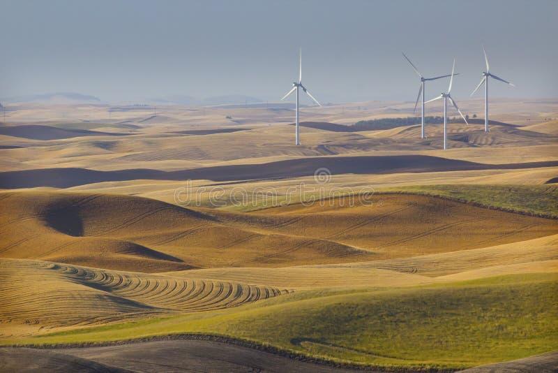 Ветротурбины в пшеничных полях стоковое фото rf
