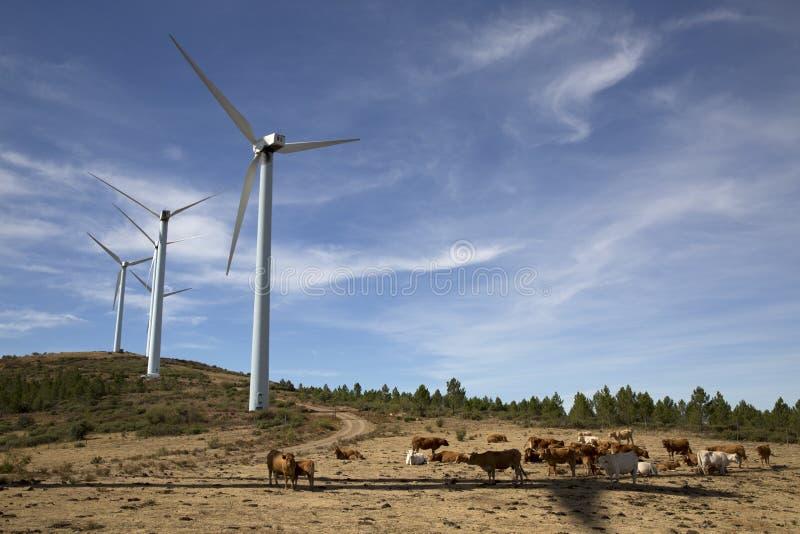 Ветротурбины Eolic на современной ветрянке обрабатывают землю для поколения альтернативной энергии стоковое фото rf