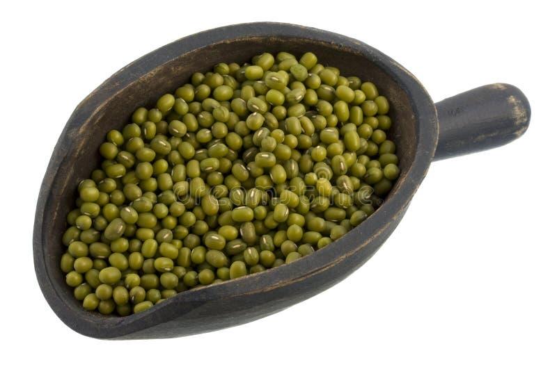 Download ветроуловитель Mung фасолей Стоковое Изображение - изображение насчитывающей legume, еда: 6851443