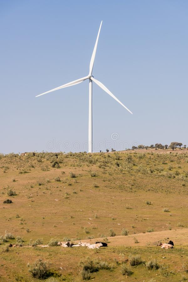 Ветрянка на ясном голубом небе в Сьерра del Merengue рядом с лугом с коровами в Plasencia стоковое фото rf