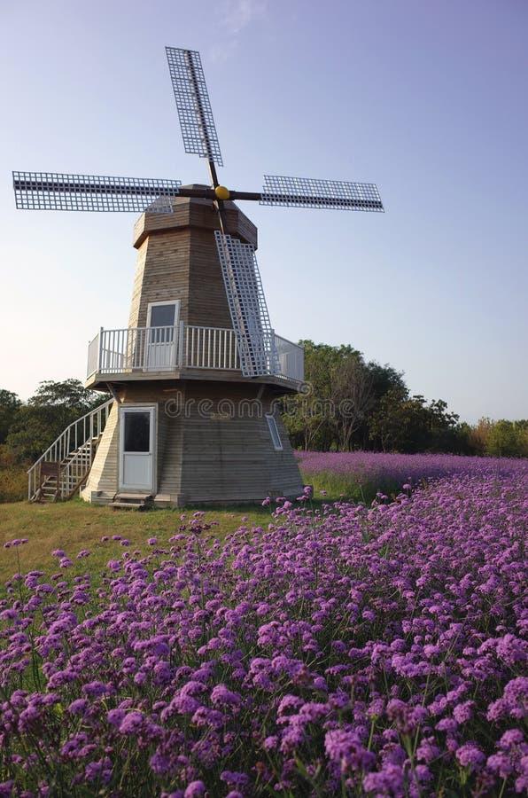 Ветрянка с землей цветка стоковое фото