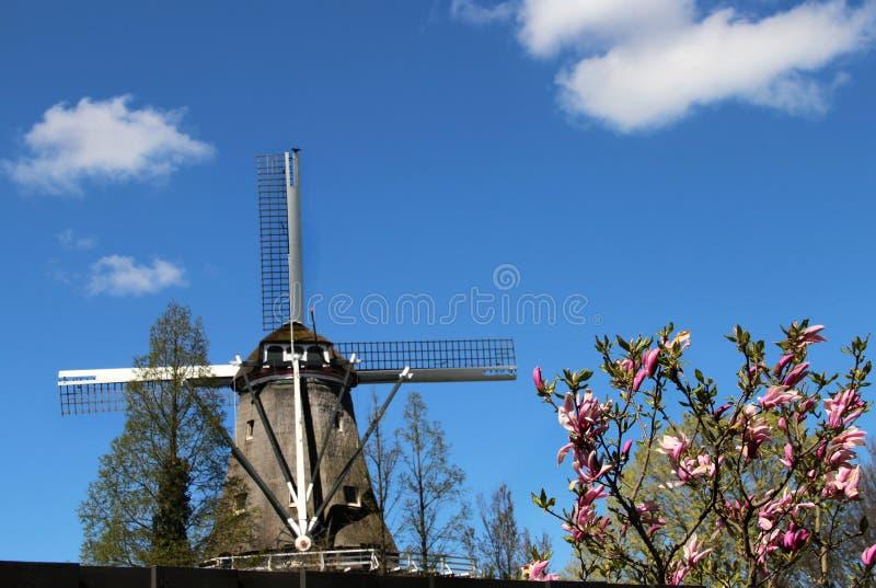 Ветрянки Голландии стоковая фотография rf