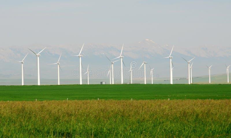 ветрянки прерии стоковая фотография rf