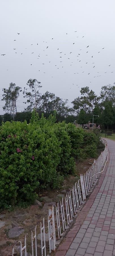 Вечером в парке Гульшан Икбал Лахор Пакистан стоковые фотографии rf