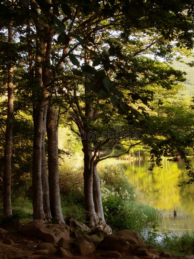 Вечер берега озера Lago Pranda - озеро в провинции Reggio Emilia, районе эмилия-Романьи, Италии Красивый национальный парк стоковые изображения