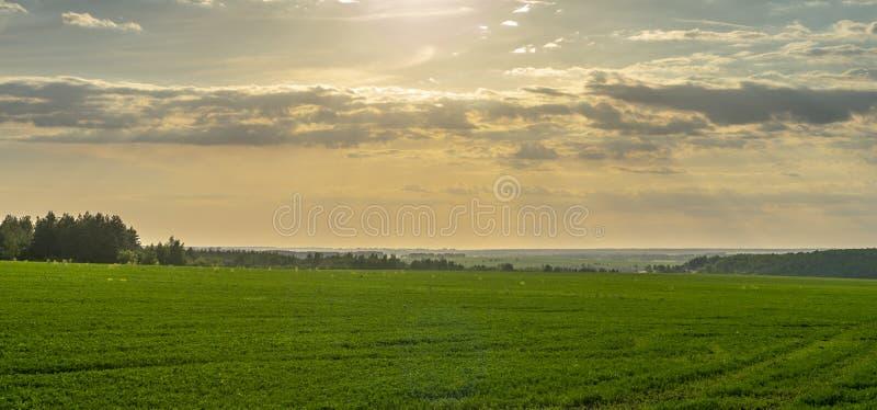 Вечер, заход солнца над аграрным полем, лучи солнца делают их путь через облака стоковое изображение rf