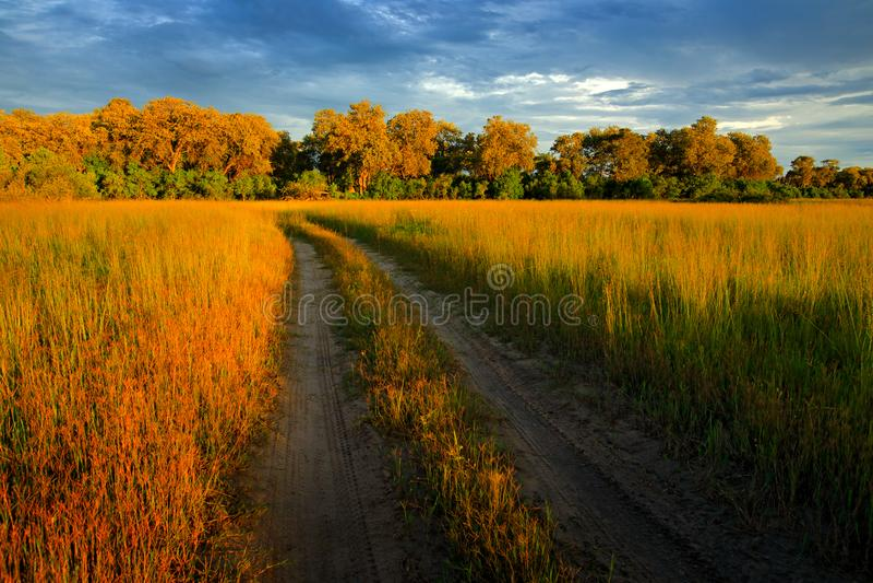 Вечер на дороге гравия в саванне, Moremi, перепаде Okavango в Ботсване, Afrivca Заход солнца в африканской природе Золотая трава  стоковая фотография rf