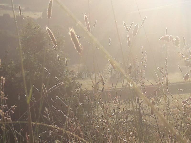 Вечер Солнце стоковые фотографии rf