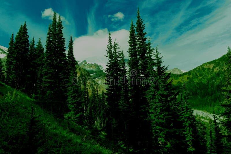Вечнозеленый лес горы стоковые изображения rf