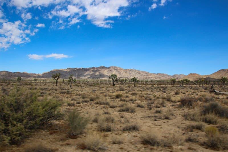 Вещь красоты пустыни стоковое фото rf