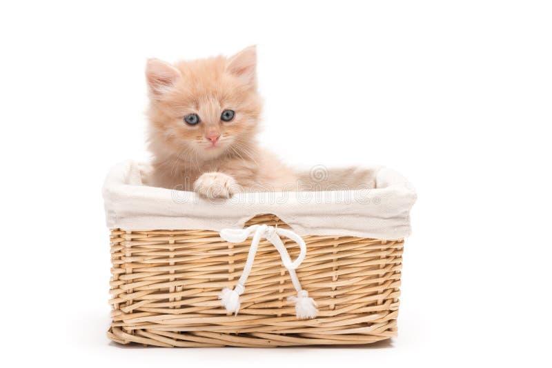 Великобританский котенок в корзине стоковая фотография rf