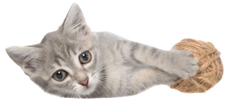 Великобританский положенный котенок tabby shorthair и игры с шариком пряжи стоковые изображения rf
