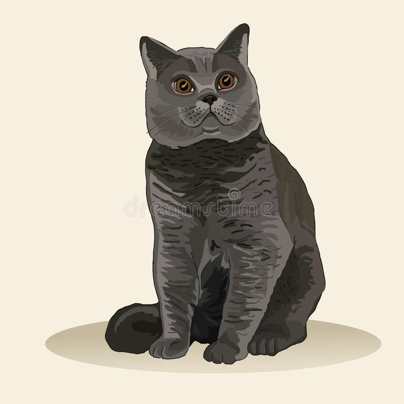 великобританское shorthair кота Порода кота Любимый любимчик Симпатичный пушистый котенок Реалистическая иллюстрация вектора бесплатная иллюстрация