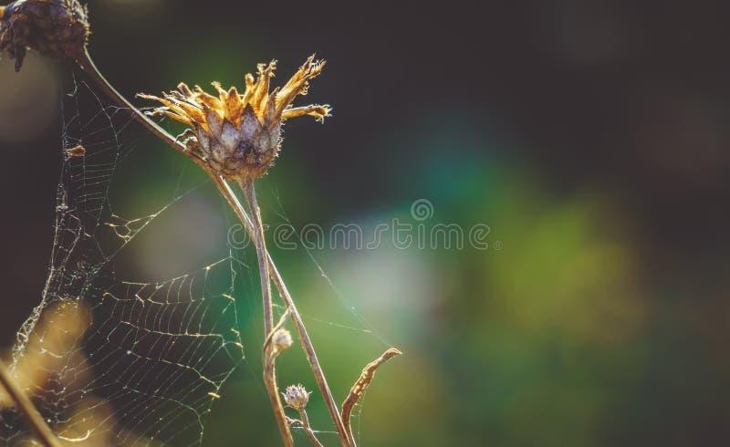 Великолепие бабьего лета в осени стоковое изображение rf