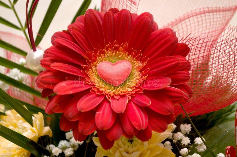 Великолепие красных роз своих красоты и свежести стоковые фото