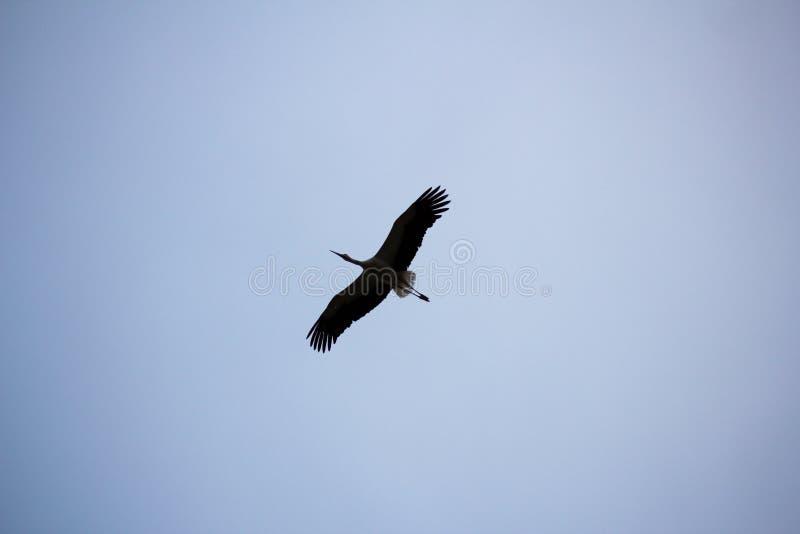 Величественный полет стоковое фото rf