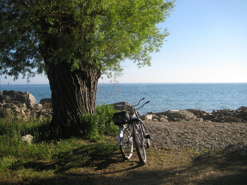 Велосипед и дерево стоковое фото rf
