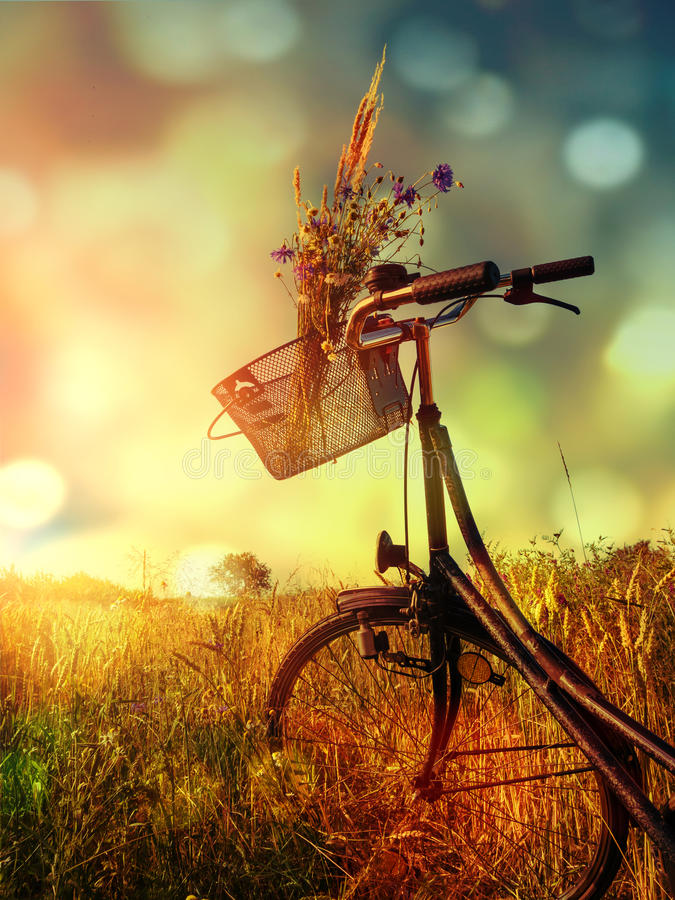 велосипед ретро стоковые изображения rf