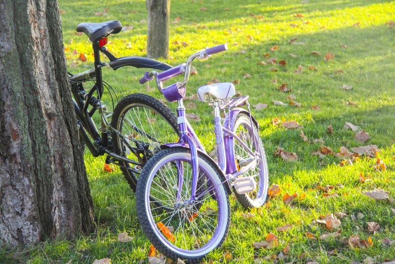 велосипеды на пути парка стоковое изображение