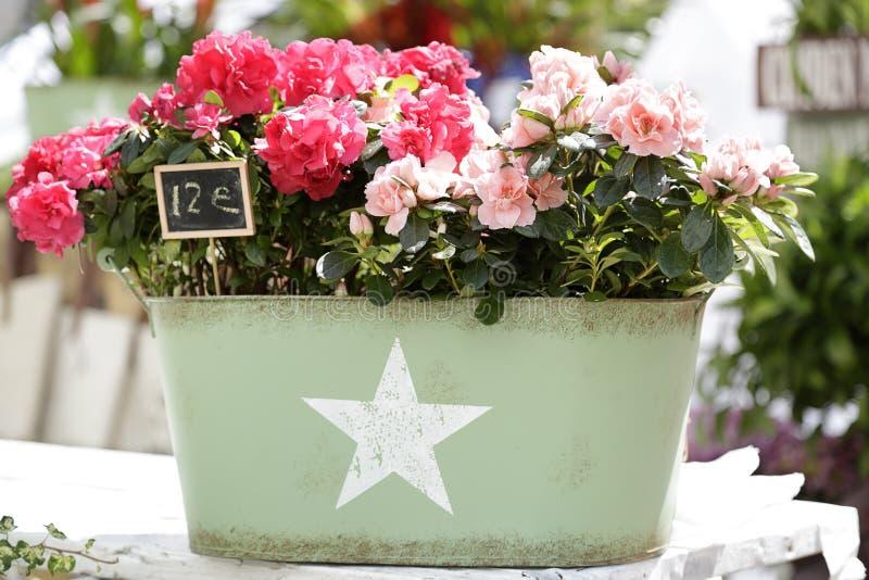Ведро вполне розовых цветков стоковое изображение rf
