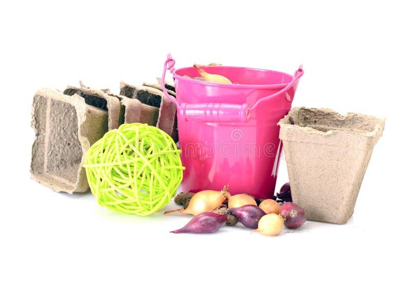 Download Ведро, лопаткоулавливатель, семена, Dlay изолировало на белизне Стоковое Фото - изображение насчитывающей ново, aiders: 40578898