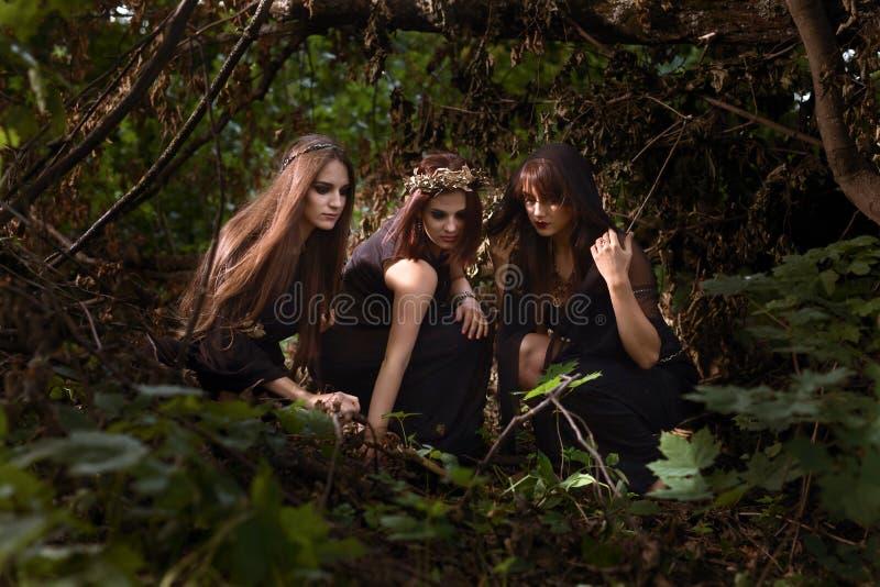 Ведьмы в темном лесе лета стоковые фотографии rf