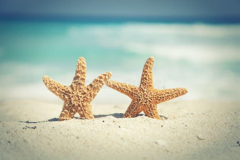 Взаимн обрабатываемые морские звёзды на пляже с океанскими волнами в backgr стоковые фото