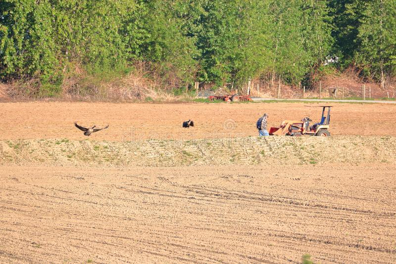 Взаимодействие фермера и живой природы стоковое фото rf