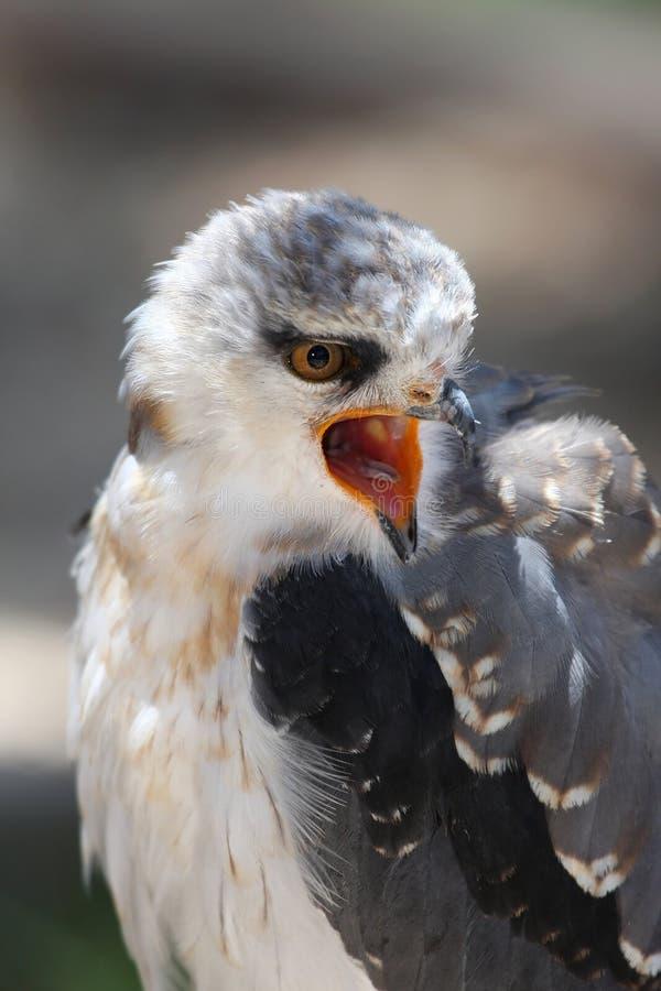 взваленный змей птицы черный стоковая фотография