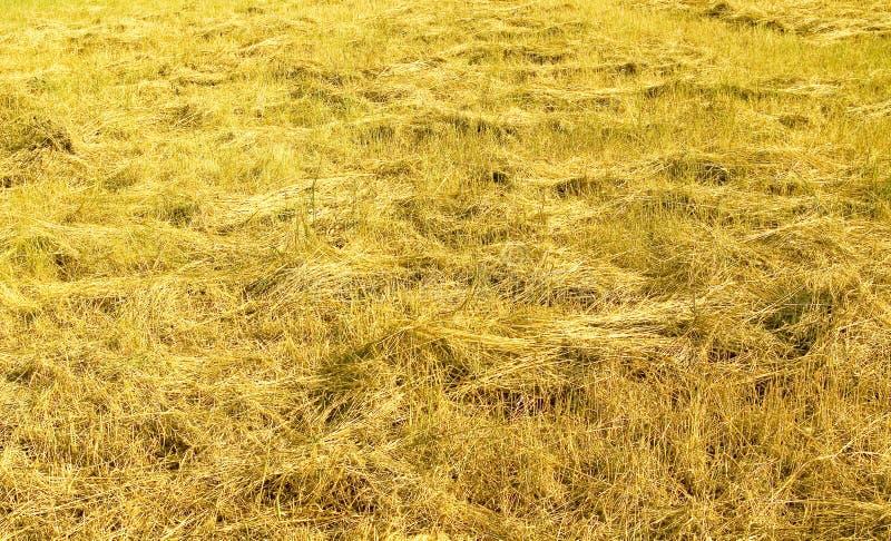 взведенное курок сено стоковые изображения