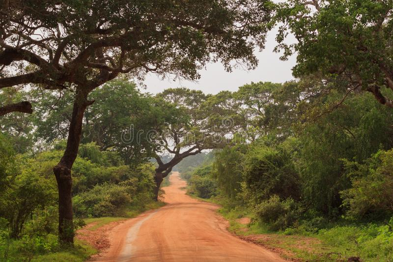 Взгляды национального парка Yala, Шри-Ланка стоковая фотография rf