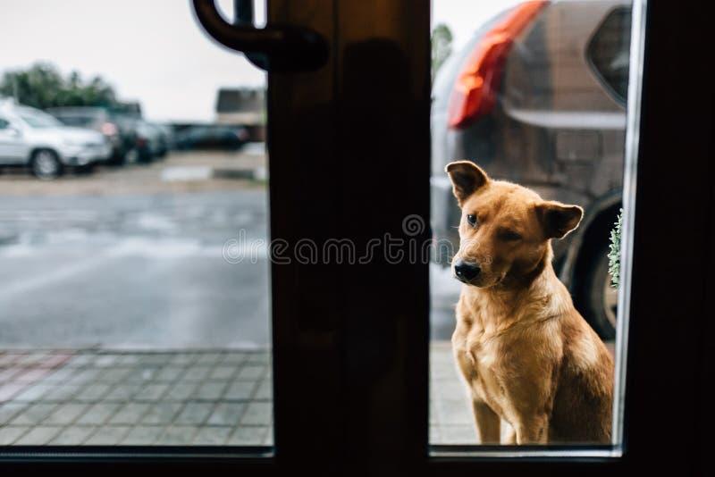 Взгляды собаки стоковая фотография