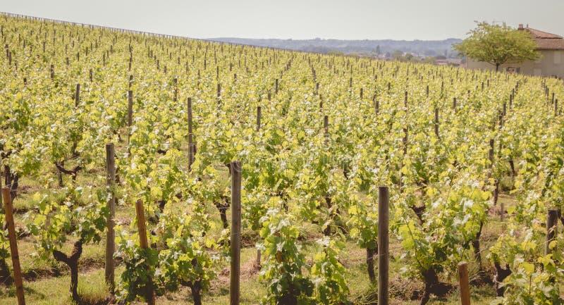 Взгляд виноградников Святого Emilion, Франции стоковое изображение rf