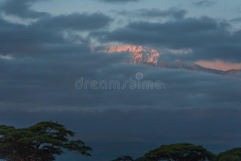 взгляд восхода солнца kilimanjaro Кении amboseli стоковые изображения rf