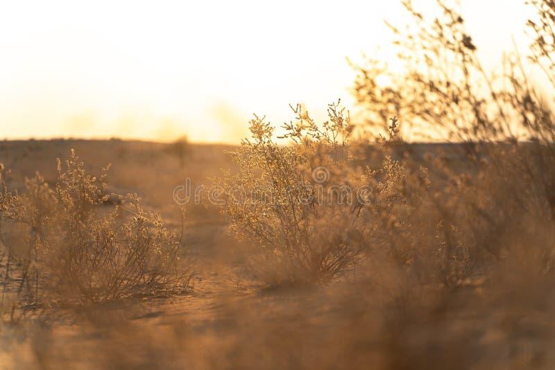 Взгляд в индийской пустыне стоковое изображение rf