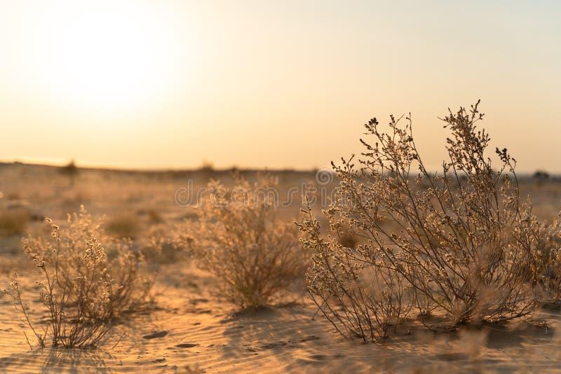 Взгляд в индийской пустыне стоковая фотография rf