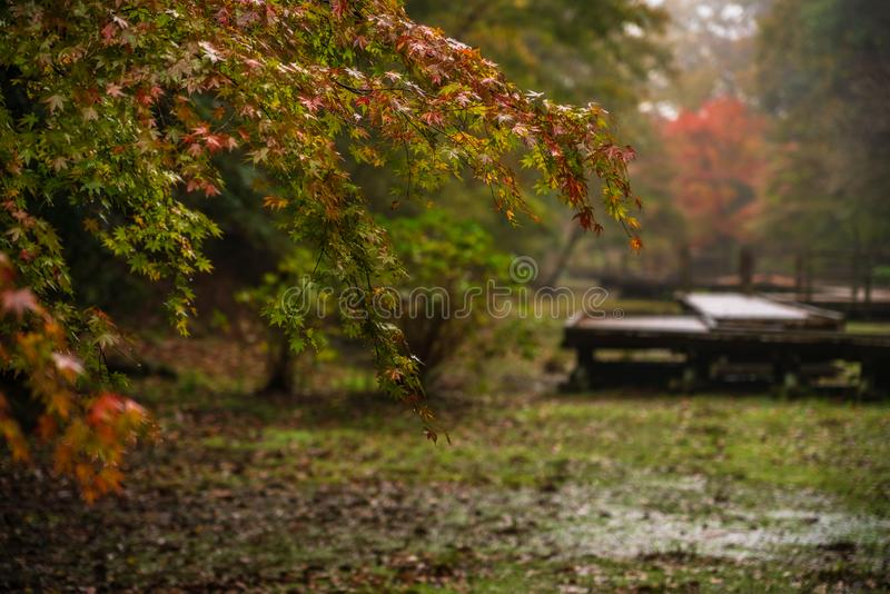 Взгляд в лес с променадом стоковое фото