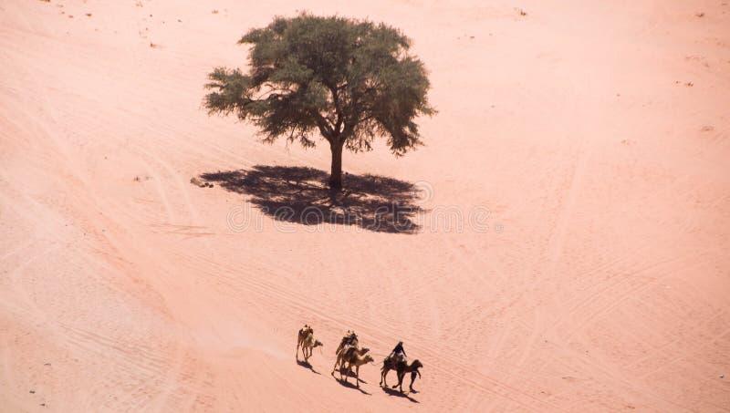 Взгляд глаза птицы верблюдов в роме вадей, Джордан стоковые изображения rf