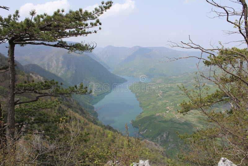 Взгляд, гора Тара, Сербия стоковое изображение rf