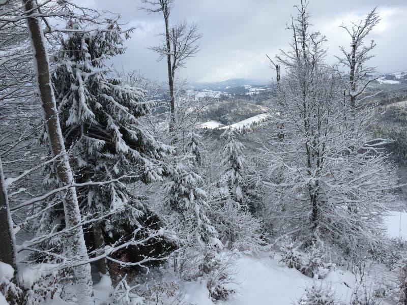Взгляд горы в зиме стоковое изображение