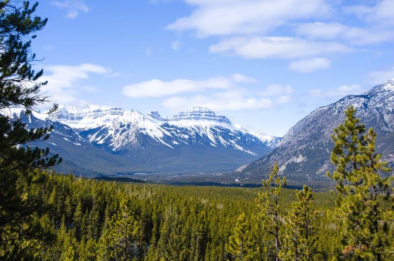 Взгляд горы и леса каньона Banff Sundance стоковые фотографии rf