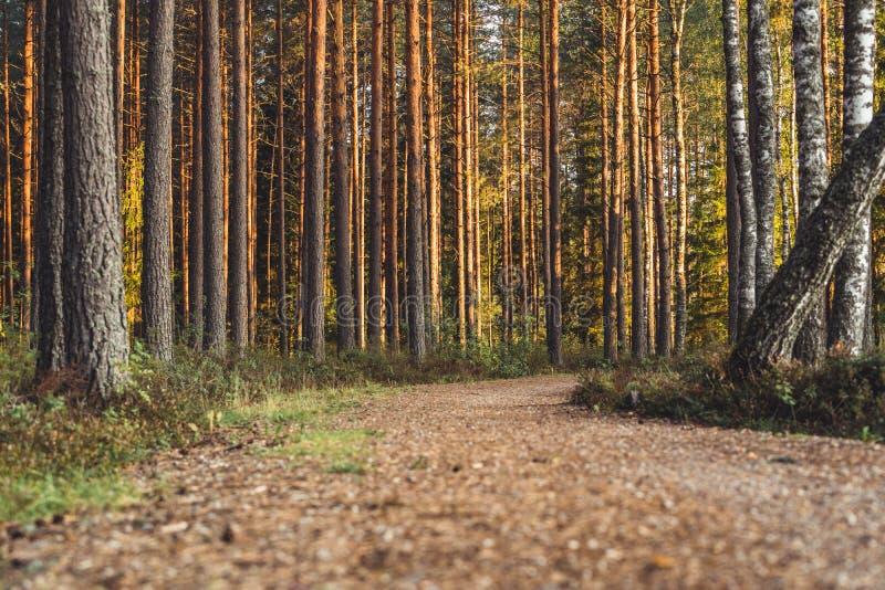 Взгляд дороги леса, возглавлять более глубокий в древесинах на солнечный летний день, отчасти неясное изображение с открытым косм стоковые фото