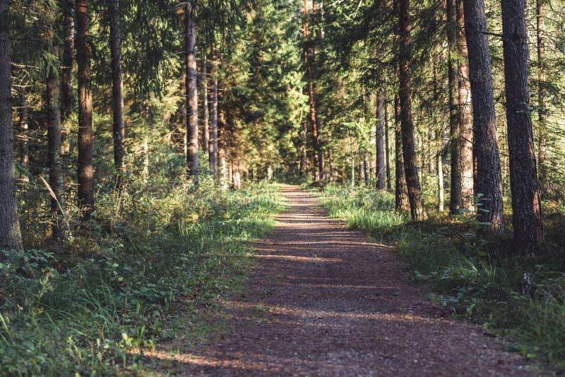 Взгляд дороги леса, возглавлять более глубокий в древесинах на солнечный летний день, отчасти неясное изображение с открытым косм стоковая фотография