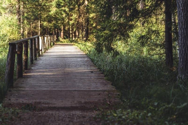 Взгляд дороги леса, возглавлять более глубокий в древесинах на солнечный летний день, отчасти неясное изображение с открытым косм стоковое изображение rf